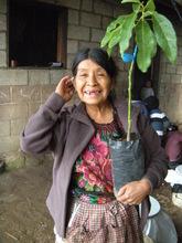 Candelaria with her Avocado Sapling