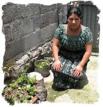 Container plantings in Santa Clara la Laguna
