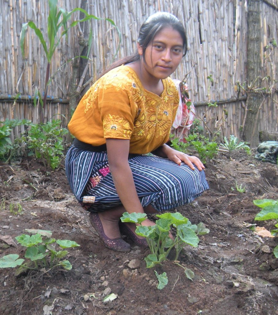 Josefa checks out the zucchini plants