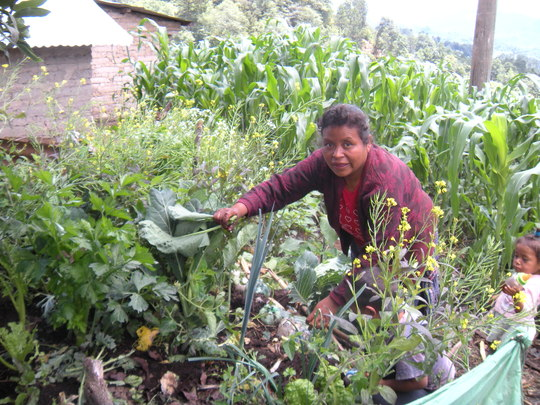Isabela Harvesting Some Vegetables for Dinner.