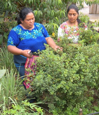 Josefa learns about wild herbs in her community
