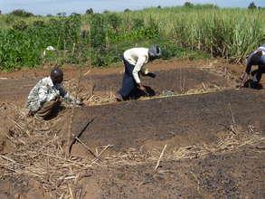 Seeding a Biochar Soil Test Plot