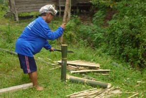 Bamboo harvesting