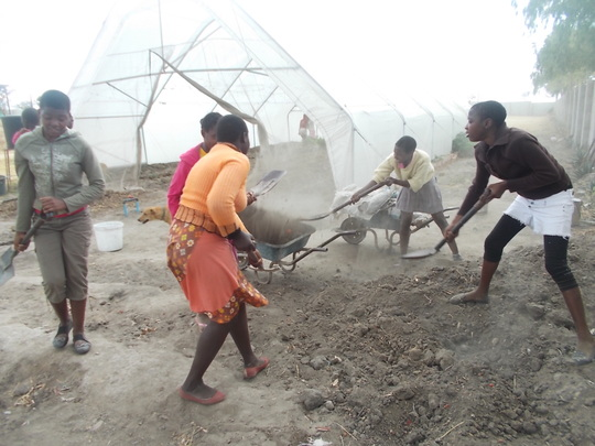 Girls  preparing for another crop in greenhouse