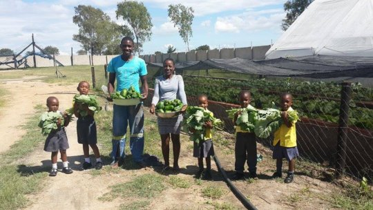Our Pre-schoolers help harvest our vegetables