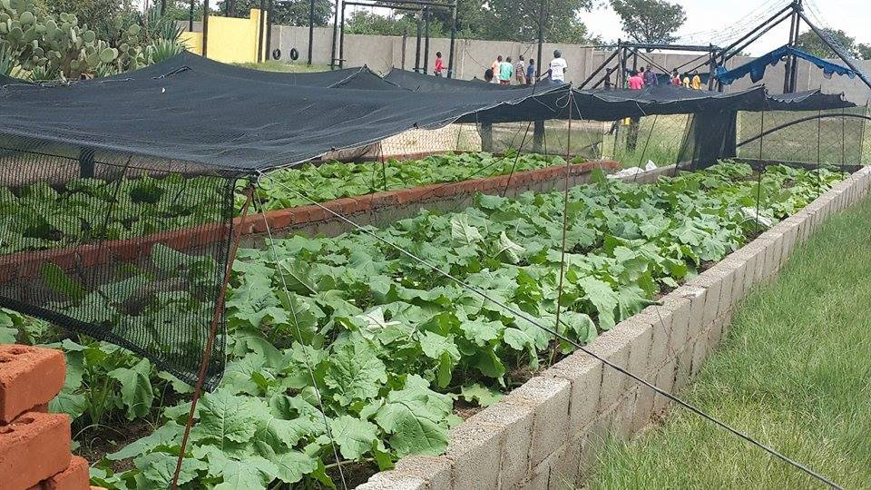Shade cloth helps protect the crop
