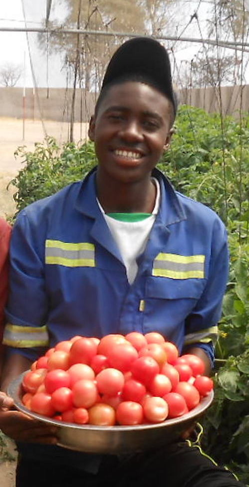 Ngqabutho harvests and maintains drip ittigation