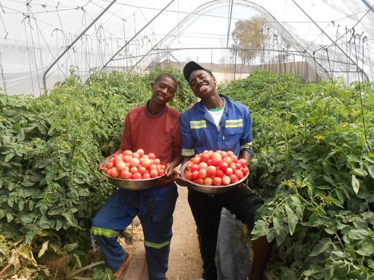 Tomatoes tomatoes tomatoes!!!