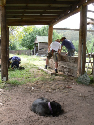 Building a sleeper wall while the dog supervises