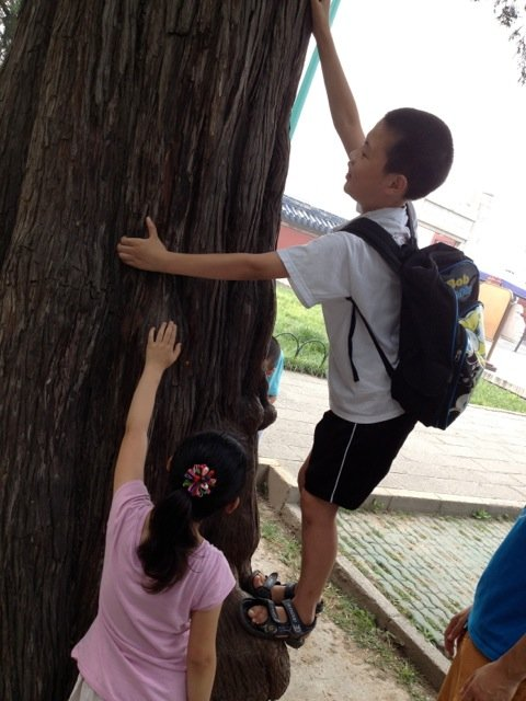 Explorers climbing trees