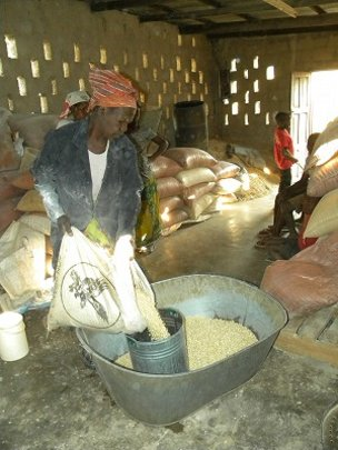 Steri measuring maize