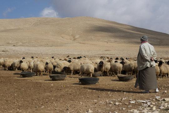 Syria in Drought (CC courtesy Joel Bombardier)