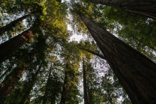 Trees by Ian Matyssik