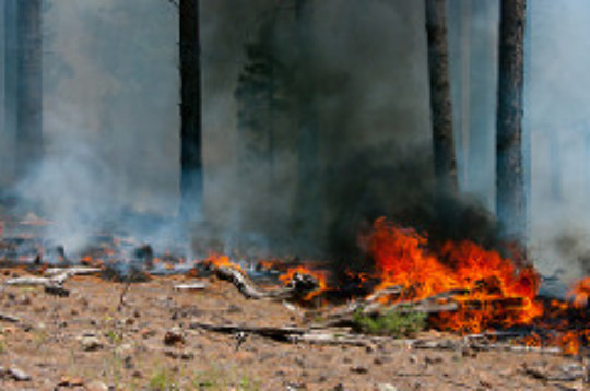 Camillo wildfire near Flagstaff, Arizona