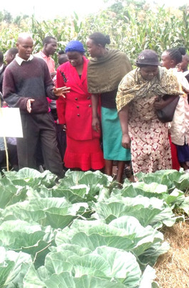 Parents learning how to grow cabbages