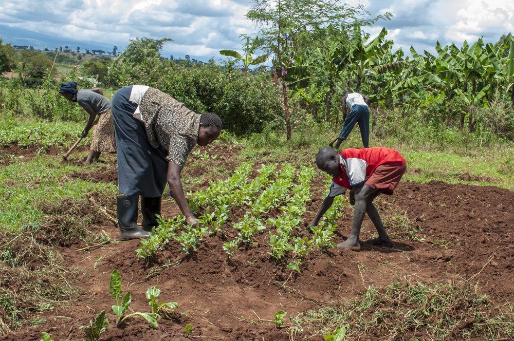 Family planting smallholding