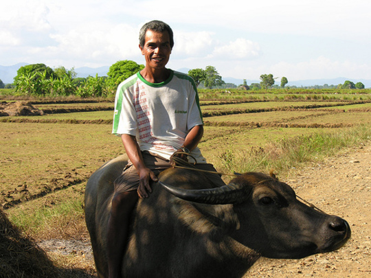 Photo of Mr. Nitura in the family rice fields