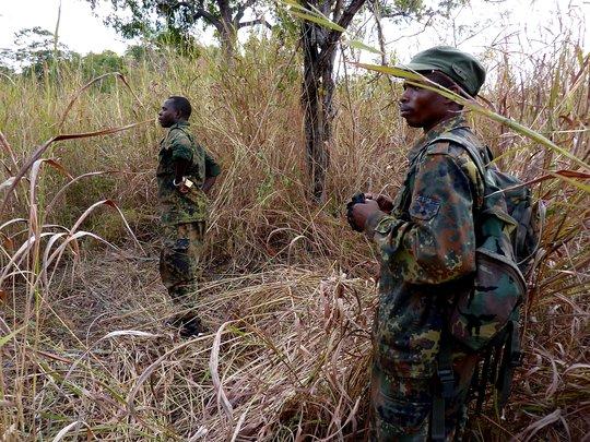 Help protect Malawi's elephants