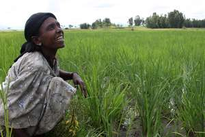 Female Rice Farmer