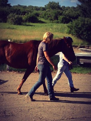Humans and Horses Working Together!