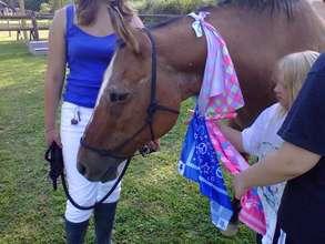 Equine Facilitated Learning - Teamwork!