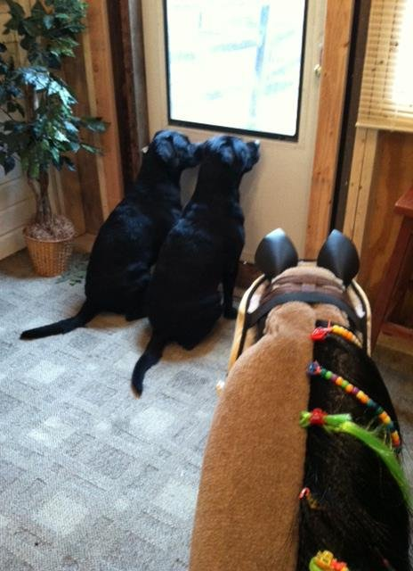 Tank and Blackberry waiting for their friends!