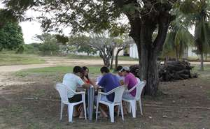 Student groups studying under a tree