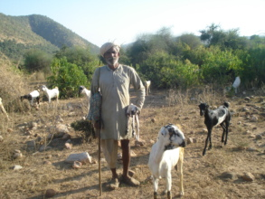 Bhagwana Gujjar_ a grazier with goats herd