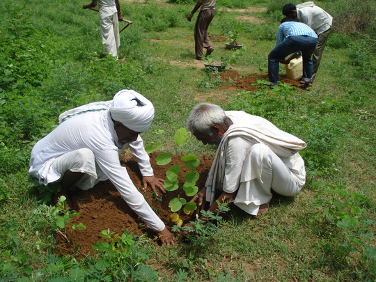 Community members planting trees at Oran