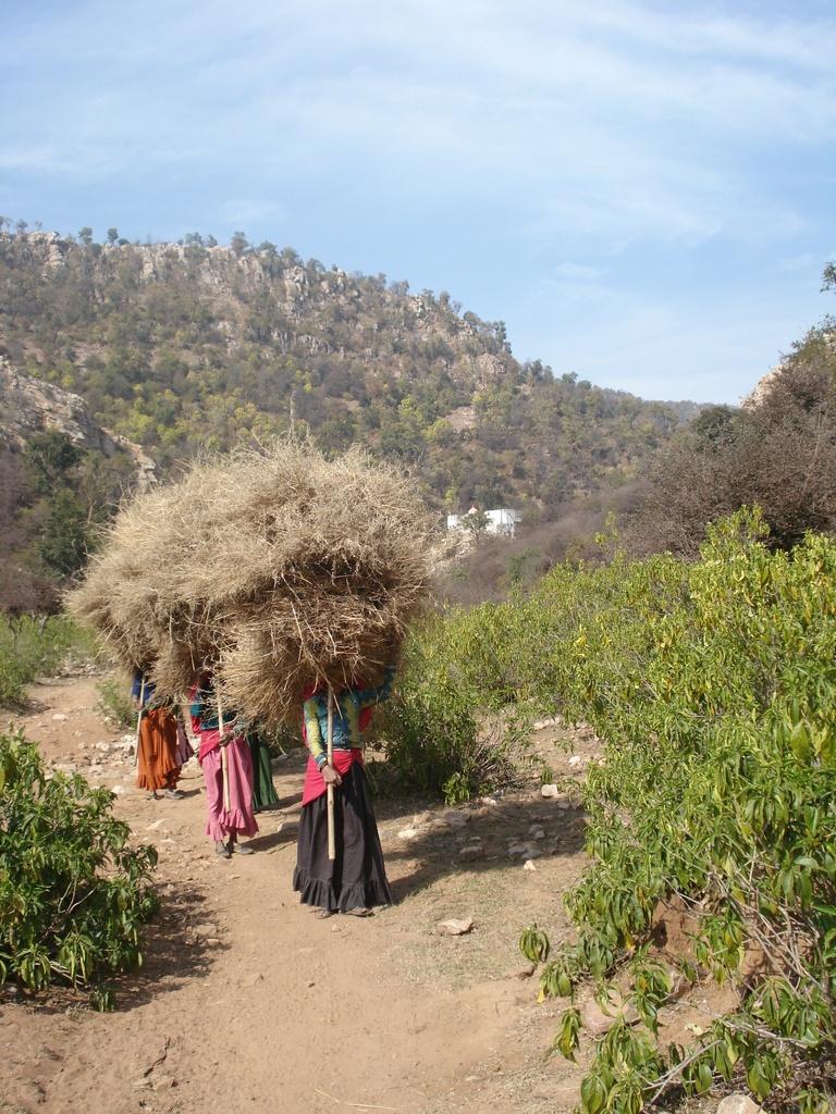 Bera village_ pastoralist women collect dry fodder