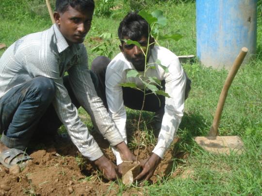 Community members planting trees
