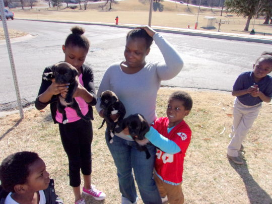 Education about spaying and neutering is essential