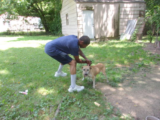 Owner putting flea prevention on his dog.