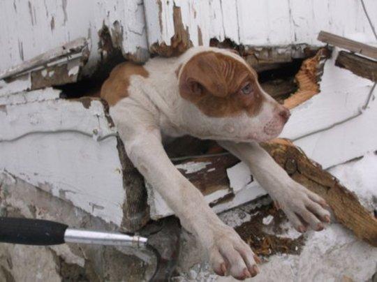 End animal suffering in KCMO urban core