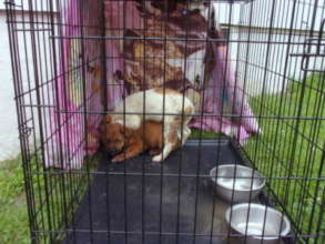 after they were trapped, so scared!