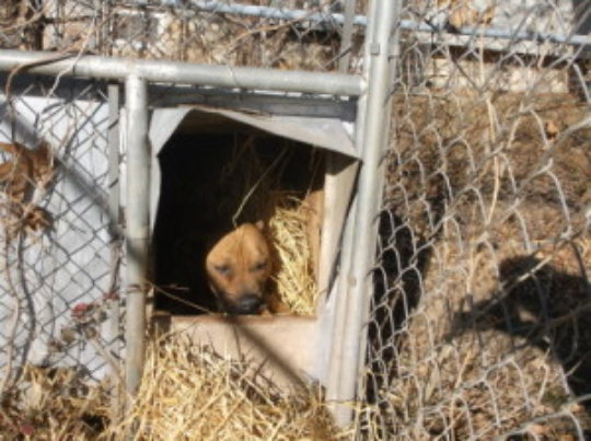 Penny in her dog house with straw provided by COH