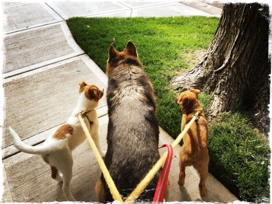 walking with foster sis