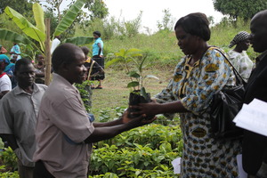 NEMA representative handing over fruit trees