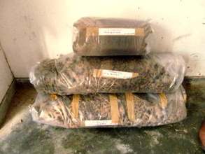 The seized animal skins in police custody.