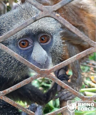 Over 20 monkeys were trapped in cages for months