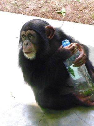 Please help Bo get to a proper wildlife sanctuary!
