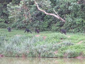 Lola ya Bonobo sanctuary in DRC