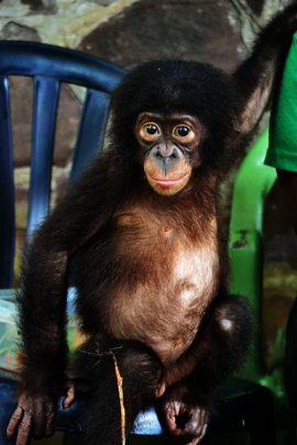 Pongo gets a second chance at life