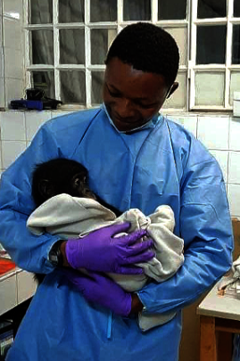 Pongo receives lifesaving care from Dr. Jonas