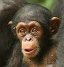 Africa's primates desperately need your help