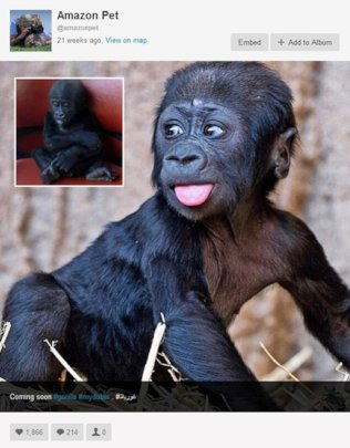 Baby gorilla for sale on Instagram
