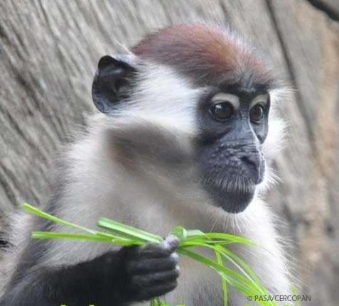 Empower 22 African Communities to Protect Primates