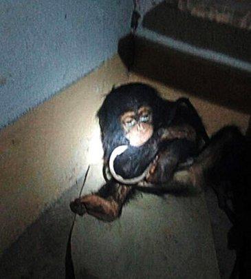 Tita, when her rescuers found her
