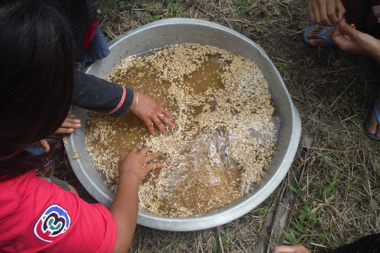 prepare the seeds with sow