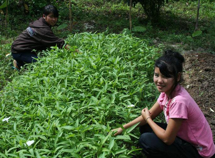 Kik (left) and Mai weeding Morning Glory